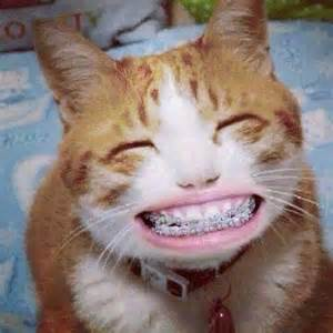 Cats with Braces On Teeth