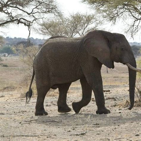 matriarchal elephants bonds tight deep form groups