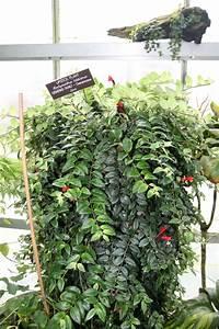 Plante D Intérieur : quelles plantes d 39 int rieur retombantes choisir marie ~ Dode.kayakingforconservation.com Idées de Décoration