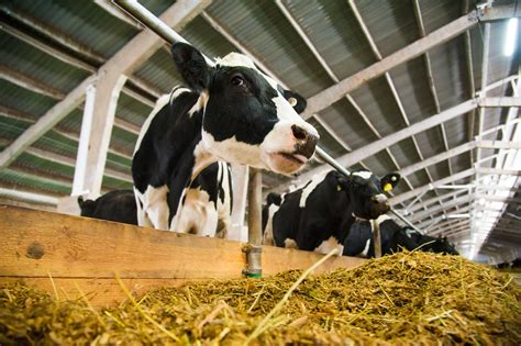 feed dairy herd management