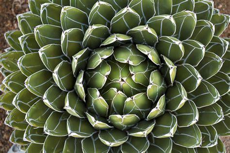 taciv plante grasse exterieur vivace 20171005222854 exemples de designs utiles