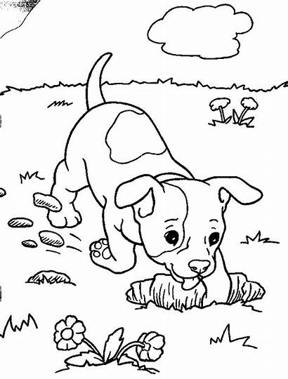 Puppies Coloring Pages Puppy Printable Dog Sheets