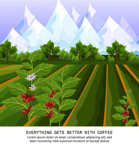 Select from premium coffee harvest images of the highest quality. Coffee beans growing in farm. harvest fields vector illustrations Vector | Premium Download