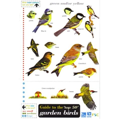 fsc field guide 50 garden birds forest school shop