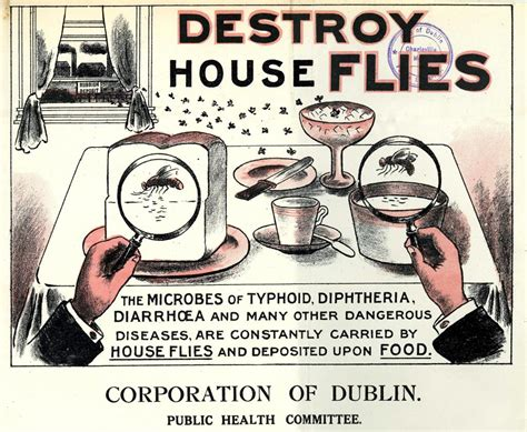 Dirt And Disease Collection Archives Exhibition