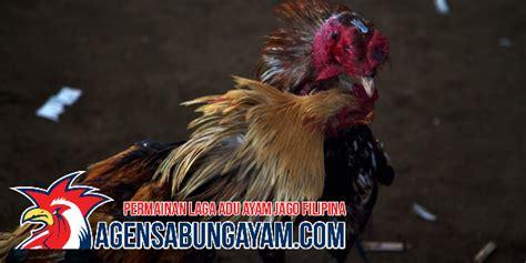 Sabung ayam biasanya ilegal dan identik dengan perjudian, namun berbeda dengan gelaran derby pelaku judi sabung ayam di tongkonan palasa, lembang (desa) tondon matallo, kecamatan. Bandar Judi Sabung Ayam Vietnam