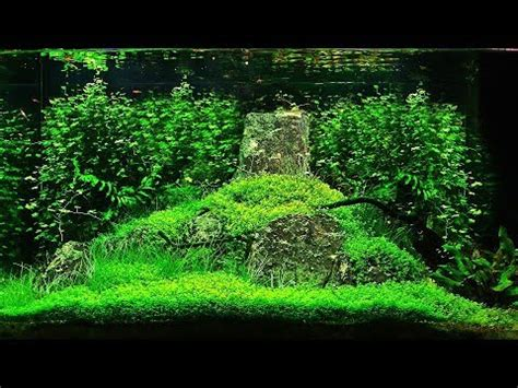 setup aquascape aquascape quot peace river quot setup to 6 months growth 130 l
