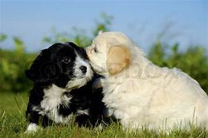 Black and white puppy dogs | Stock Photo | Colourbox