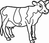 Cow Coloring Pages Drawing Printable Cute Cattle Easy Farm Face Animal Colouring Adults Dairy Getcolorings Cows Mask Getdrawings Strange Cartoon sketch template