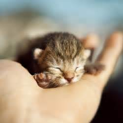 miniature cats for 3867418282 92a0def454 jpg