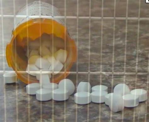 amphetamine toxicity  dogs vetgirl veterinary ce blog