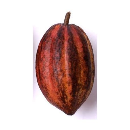 sticker chocolat cacao etiquette autocollant