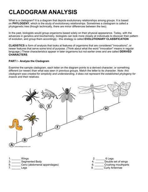 Worksheet Cladograms Worksheet Grass Fedjp Worksheet Study Site