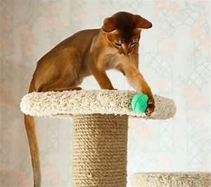 Arbre À Chat Pas Cher : arbre chat pas cher o le trouver et quel prix ~ Nature-et-papiers.com Idées de Décoration