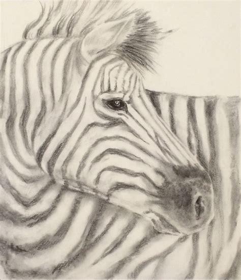 Zebra Pencil Sketch Wwwimgkidcom The Image Kid Has It