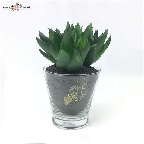 ต้นไม้ประดิษฐ์ แคคตัส Cactus green จัดในแก้ว สวยเหมือนของ ...