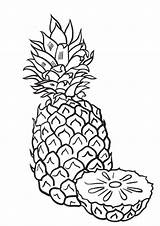 Coloring Pineapples Pineapple Popular sketch template