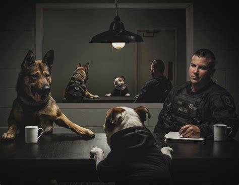 VPD creates hilarious calendar of Vancouver's police dogs ...
