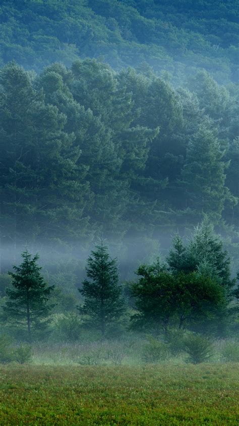 hd background foggy forest fog layers green trees grass