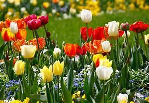 Blumen Im Frühling : bl tenpracht von fr hjahr bis herbst wie es funktioniert zeigt ihnen obi ~ Orissabook.com Haus und Dekorationen