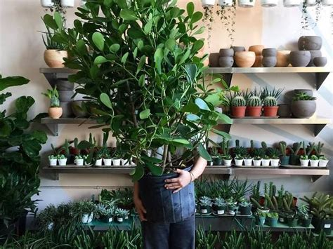plant stores nyc offers  create  indoor jungle