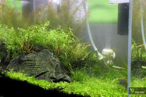 Aquascaping Forum - neues projekt ada cube garden 45 p 34 liter seite 4
