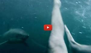 Real     Life Shark Jumping