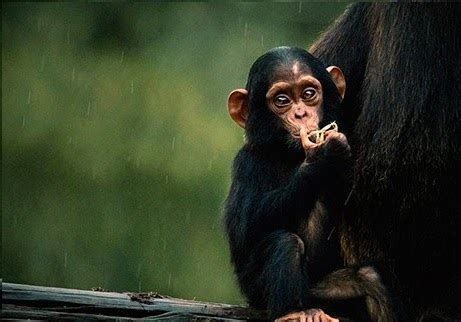 Most Beautiful Wallpapers Of Animals - wall photos most beautiful baby animals photos baby