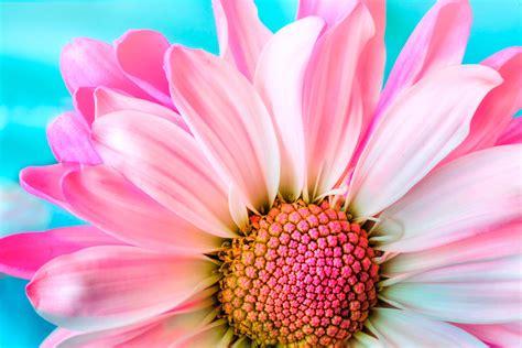 20 Fotos de Flores Impresionantes para Recibir la Primavera