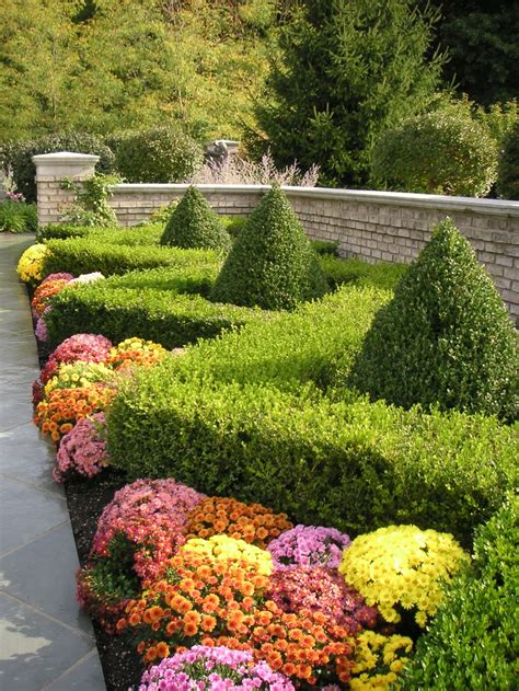 hedge gardens zigzag boxwood hedge and mums