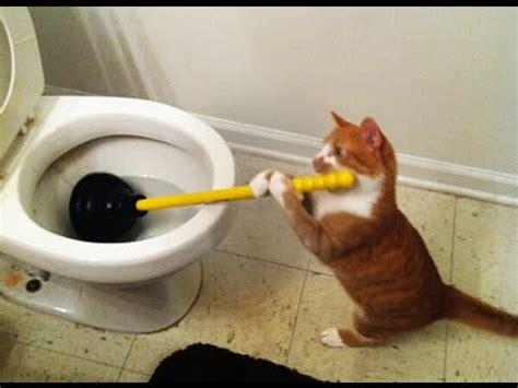 funny cats acting  humans news hd mort de rire top