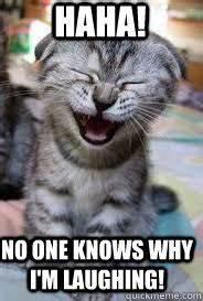 laughing cat MEMEs