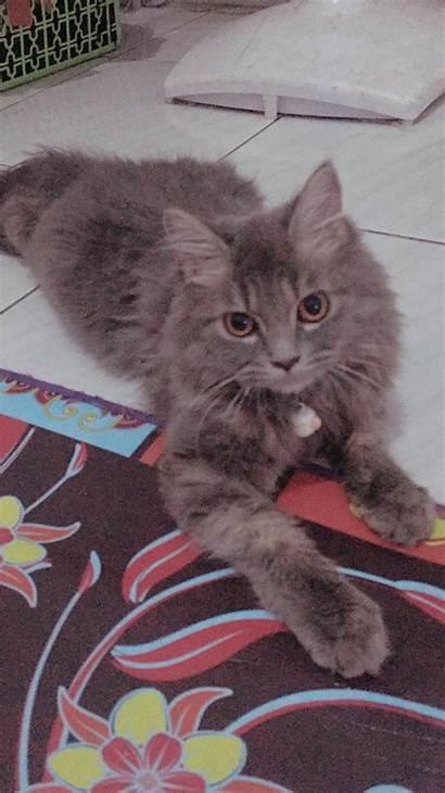 Gambar Hiding Hissing Kitten Alfia Revina Saputri