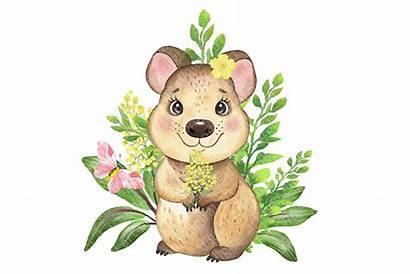 Animals Australian Clipart Animal Koala Watercolor Quokka