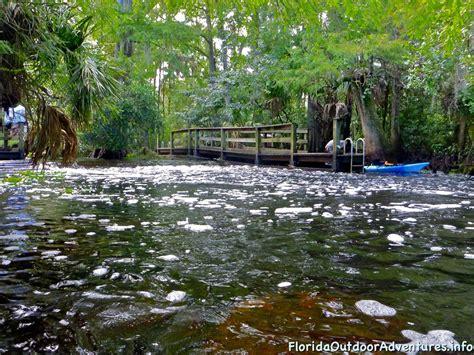 loxahatchee river kayaking canopy cypress tree under florida floridaoutdooradventures info loading beach county