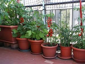 Gemüse Auf Dem Balkon : gem se im k bel ~ Lizthompson.info Haus und Dekorationen