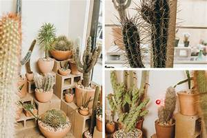 Pot A Cactus : how to keep an artful pot of desert plants alive indoors ~ Farleysfitness.com Idées de Décoration