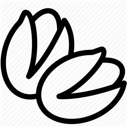 Pistachio Cartoon Icon Pistachios Clipart Icons Clip