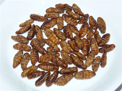 cuisine insectes comestibles insectes comestibles ustensiles de cuisine