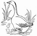 Coloring Goose Cartoon Realistic Coloringpagesfortoddlers Enregistree Depuis sketch template