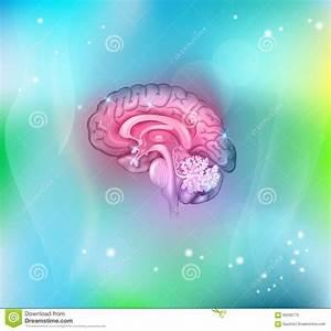Human Brain Background Stock Vector