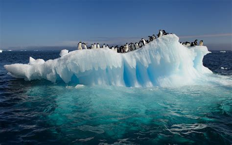 HD Awesome View Of Nature Penguins On Ice In Antarctica