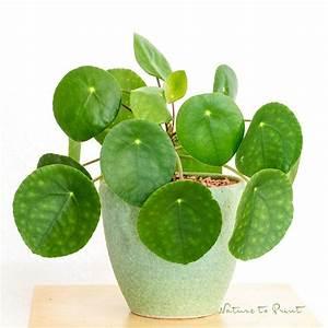 Blühende Zimmerpflanzen Pflegeleicht : die besten 17 ideen zu pflegeleichte zimmerpflanzen auf ~ Michelbontemps.com Haus und Dekorationen