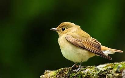 Bird Birds Sparrow Wallpapers Spring Awesome Desktop