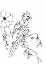 Pigeon Fancy Colouring Coloring Berries sketch template
