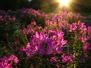 Blumen Im November : blumen sind das l cheln der erde foto bild pflanzen ~ Lizthompson.info Haus und Dekorationen