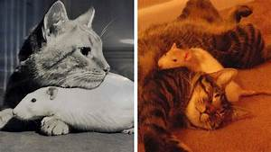 19 Cat And Mouse Friends Examples That Will Make You