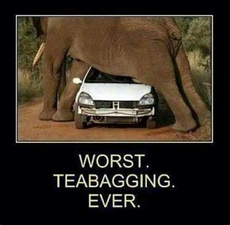 Tea Bag Meme - tea bag funny pinterest