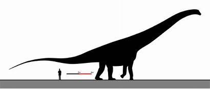Argentinosaurus Relative Sizes Human Dinosaurs Huinculensis Talk
