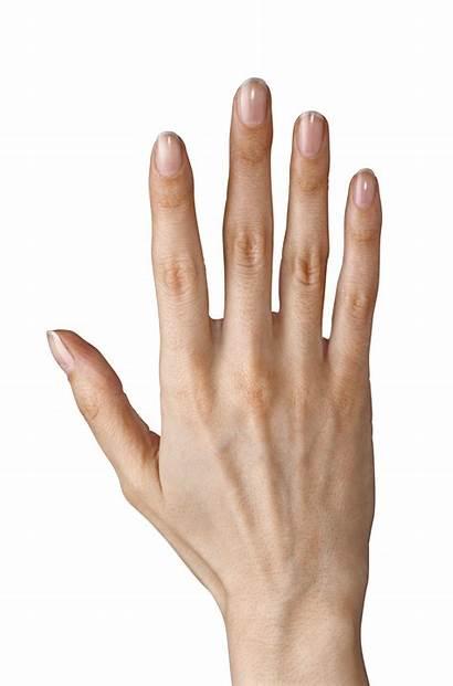 Fingers Clipart Five Showing Hands Yopriceville Transparent